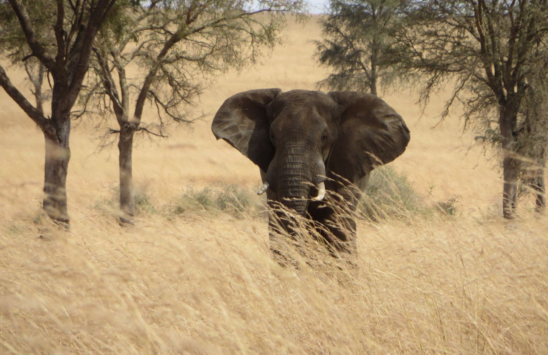 kitgum dag10 olifant 1920